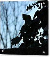 Macro On Leaves Acrylic Print