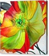Macro Poppy Acrylic Print