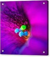 Macro Purple Flower Acrylic Print