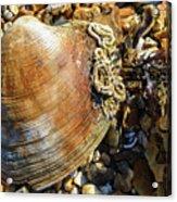 Macro Shell Acrylic Print