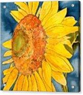 Macro Sunflower Art Acrylic Print