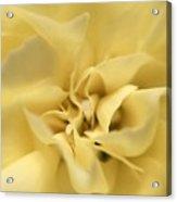 Macro Yellow Rose Acrylic Print