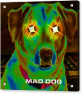 Mad Dog Acrylic Print