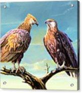 Madagascar Fish Eagle  Acrylic Print