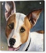 Terrier  Acrylic Print