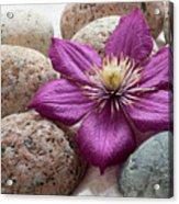 Clematis Flower On Meditation Stones Acrylic Print