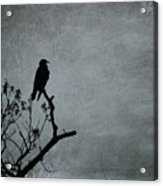 Magestic Crow Acrylic Print