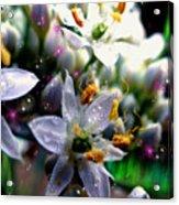 Magic Blossoms Acrylic Print