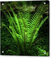 Magic Fern Acrylic Print