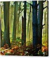 Magic Forest Acrylic Print by Helen Carson