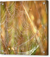 Magic In The Marsh Acrylic Print