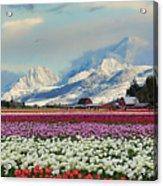 Magic Landscape 1 - Tulips Acrylic Print