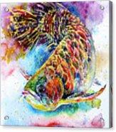 Magic Of Arowana Acrylic Print