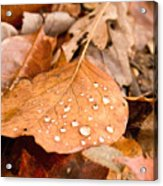 Magic Of Surface Tension Acrylic Print
