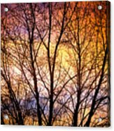 Magical Colorful Sunset Tree Silhouette Acrylic Print