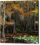 Magical Cypress Trees Forest Acrylic Print