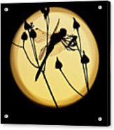 Magical Dragonfly Acrylic Print