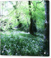 Magical Forest At Blarney Castle Ireland Acrylic Print