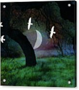 Magical Forest Night Acrylic Print