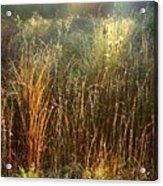 Magical Light On The Marsh Acrylic Print