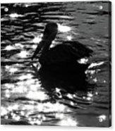 Magical Pelican Acrylic Print