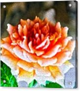 Magical Rose Acrylic Print