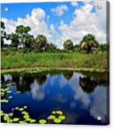 Magical Water Lily Pond 2 Acrylic Print