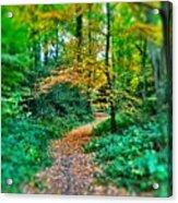 Magical Woodland Walk Acrylic Print