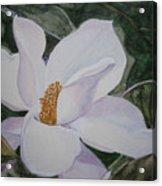 Magnificent Magnolia Acrylic Print