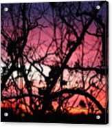 Magnificent Sunset And Trees Acrylic Print