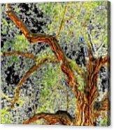 Magnificent Tree Acrylic Print