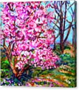Magnolia - Early Spring Acrylic Print