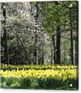 Magnolia And Daffodils Acrylic Print