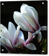 Magnolia And House Guest Acrylic Print