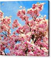 Magnolia Beauty #13 Acrylic Print