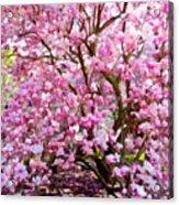 Magnolia Beauty #14 Acrylic Print