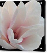 Magnolia Blossom I Acrylic Print