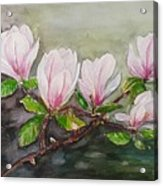 Magnolia Blossom - Painting Acrylic Print