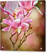 Magnolia Branch Acrylic Print