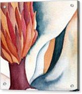 Magnolia Close-up I Acrylic Print