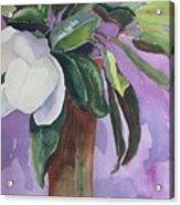 Magnolia Acrylic Print by Elizabeth Carr