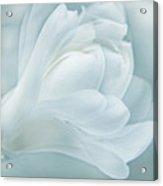 Softness Of A Aqua Blue Magnolia Flower Acrylic Print