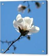 Magnolia Flower Tree Art Prints Blue Sky Floral Baslee Troutman Acrylic Print