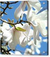 Magnolia Flowers Floral Art Spring Flowering Tree Baslee Troutman Acrylic Print