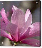 Magnolia Galaxy 7044 Acrylic Print
