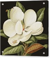 Magnolia Grandiflora Acrylic Print
