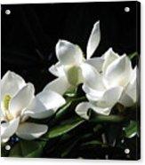Magnolia Acrylic Print