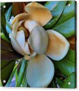 Magnolia In Oxford Acrylic Print