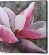 Magnolia In Shadow Acrylic Print