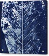 Magnolia Leaf Skeleton Acrylic Print